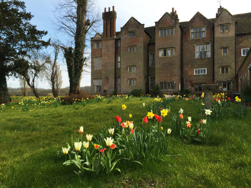 John the gardener has been planting thousands of daffodils and tulips. This spring the meadow to the north of the house was ablaze with colour.